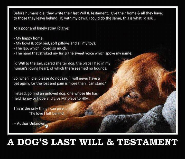 Dog Death Quotes: In Memory Of » Michigan Animal Adoption Network