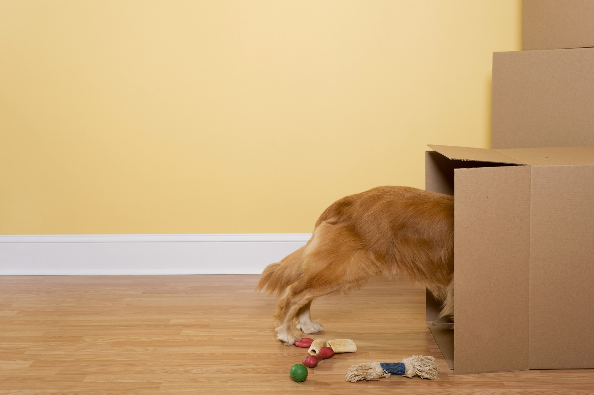 Apartments That Allow Pets
