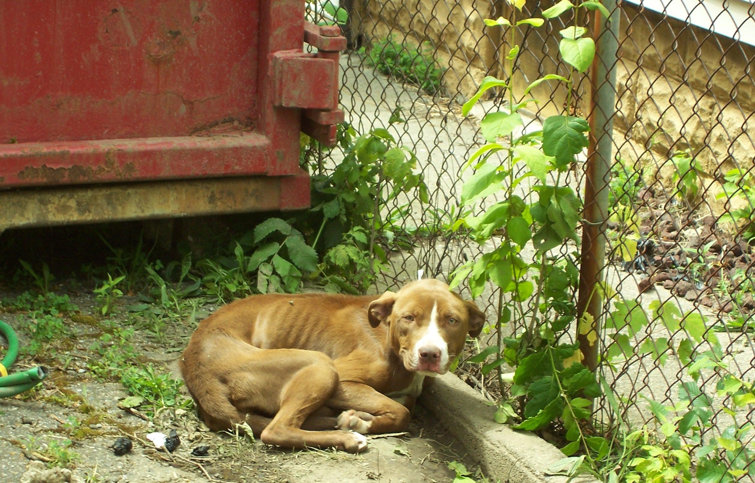 Dog Rescue Supplies