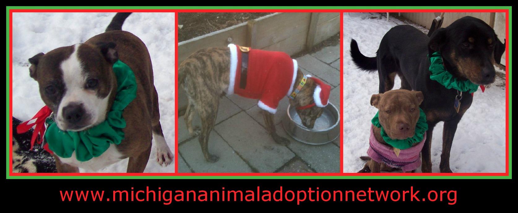 December 26 PicMonkey Collage