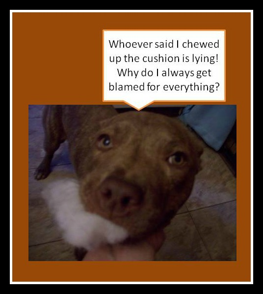 DOG SHAMING 2 pic monkey