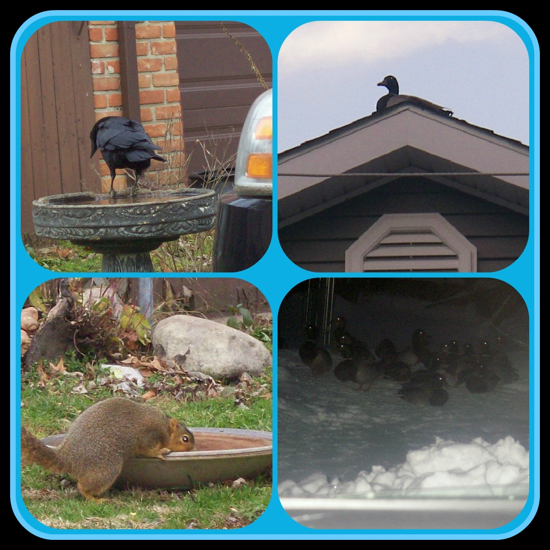 January 1 2013 wildlife PicMonkey Collage