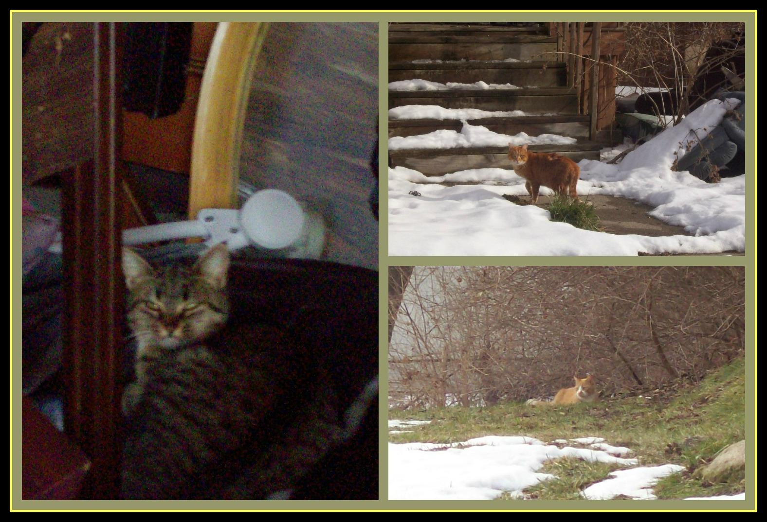 January 13 2013 PicMonkey Collage