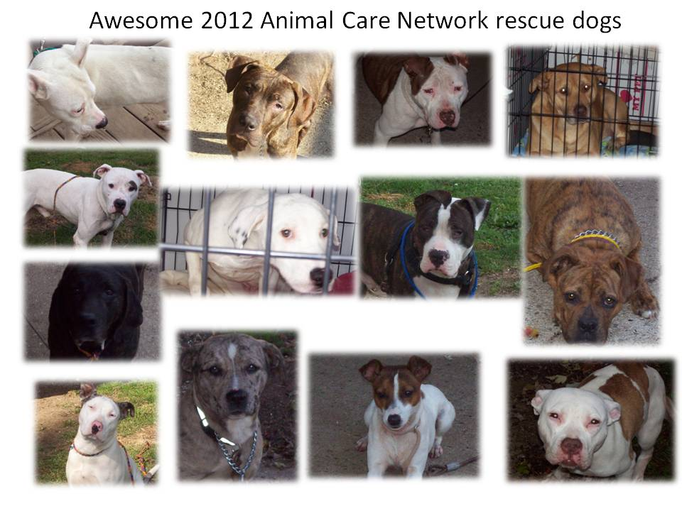 RESCUE DOGS 11-2012
