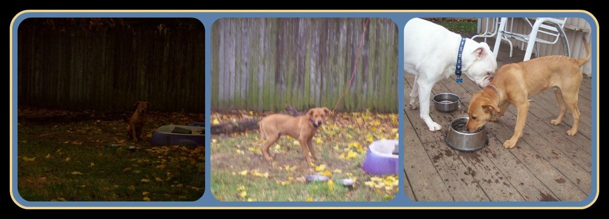 February 1 2013 PicMonkey Collage