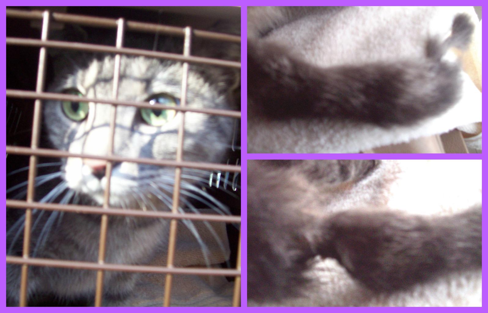 February 13 2013 PicMonkey Collage