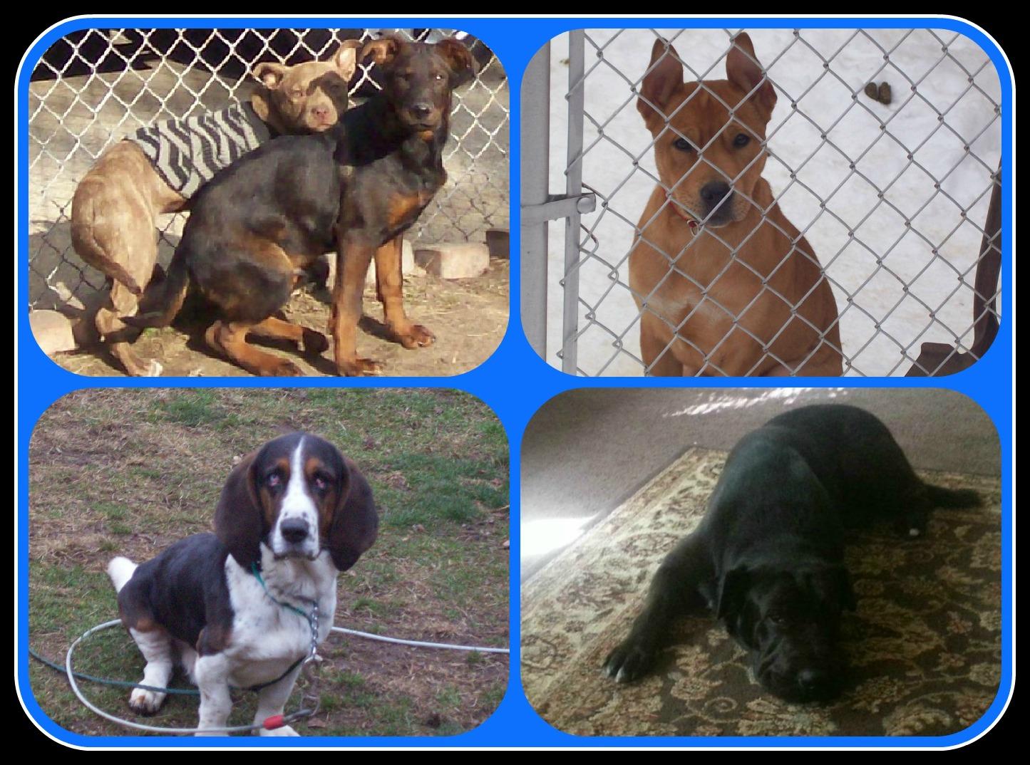 February 14 2013 PicMonkey Collage