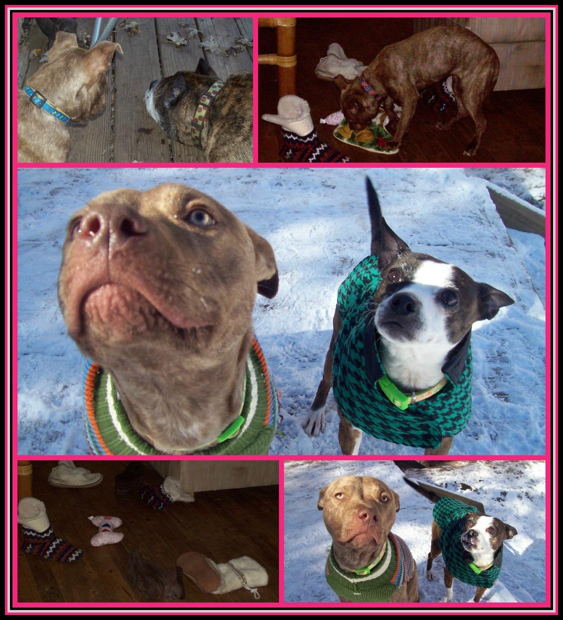 February 15 2013 PicMonkey Collage