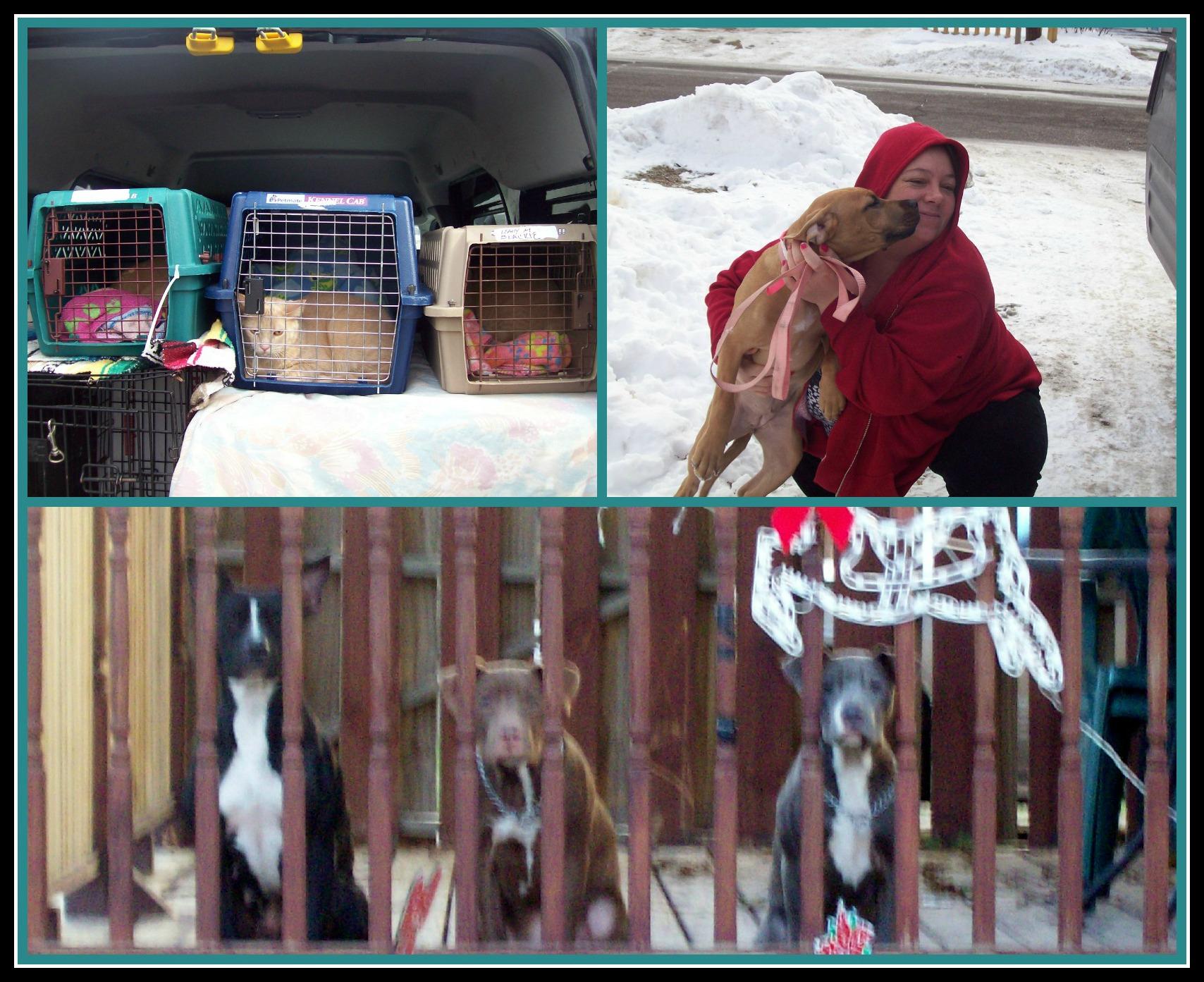 February 20 2013 PicMonkey Collage