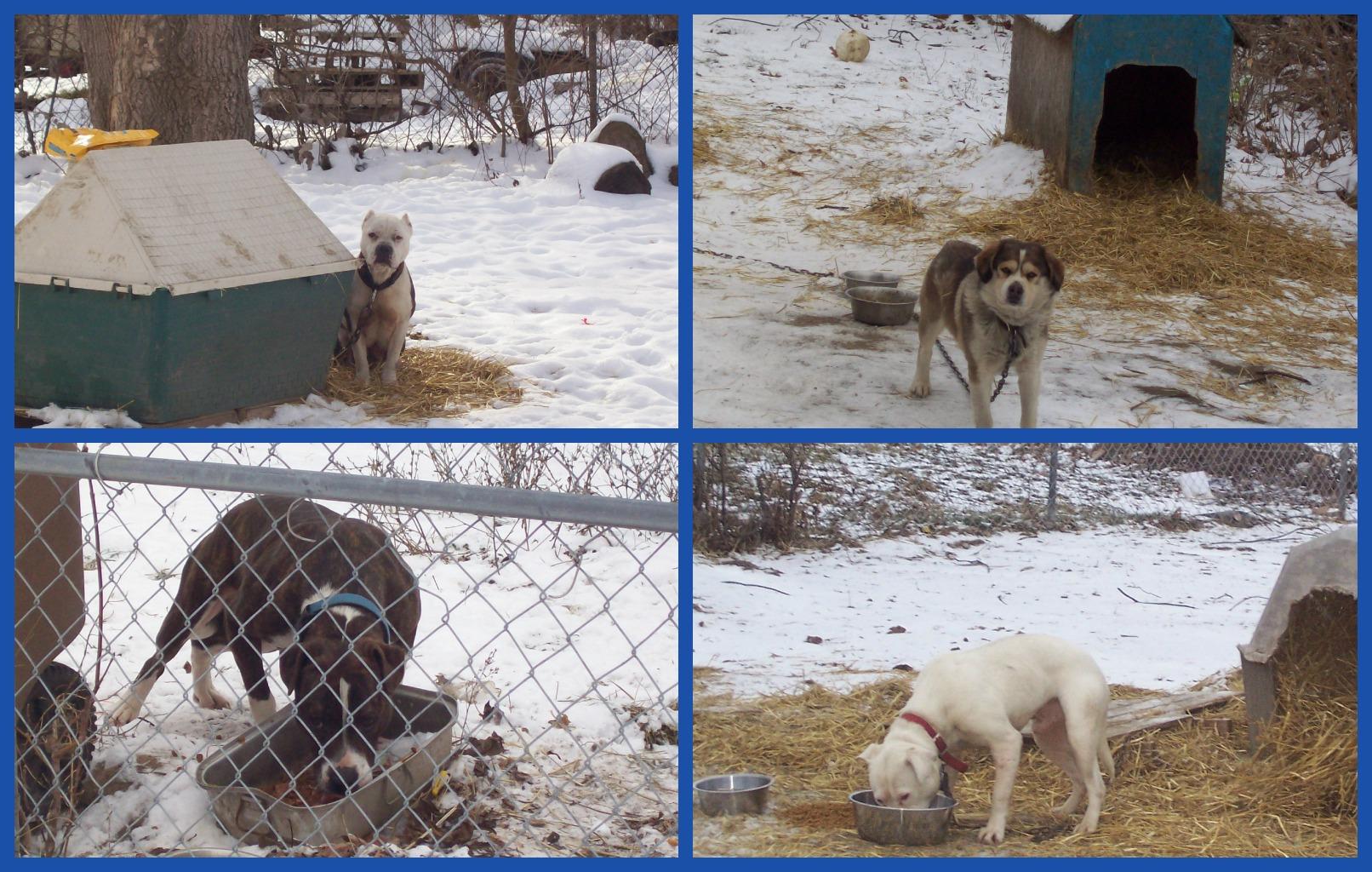 February 5 2013 PicMonkey Collage