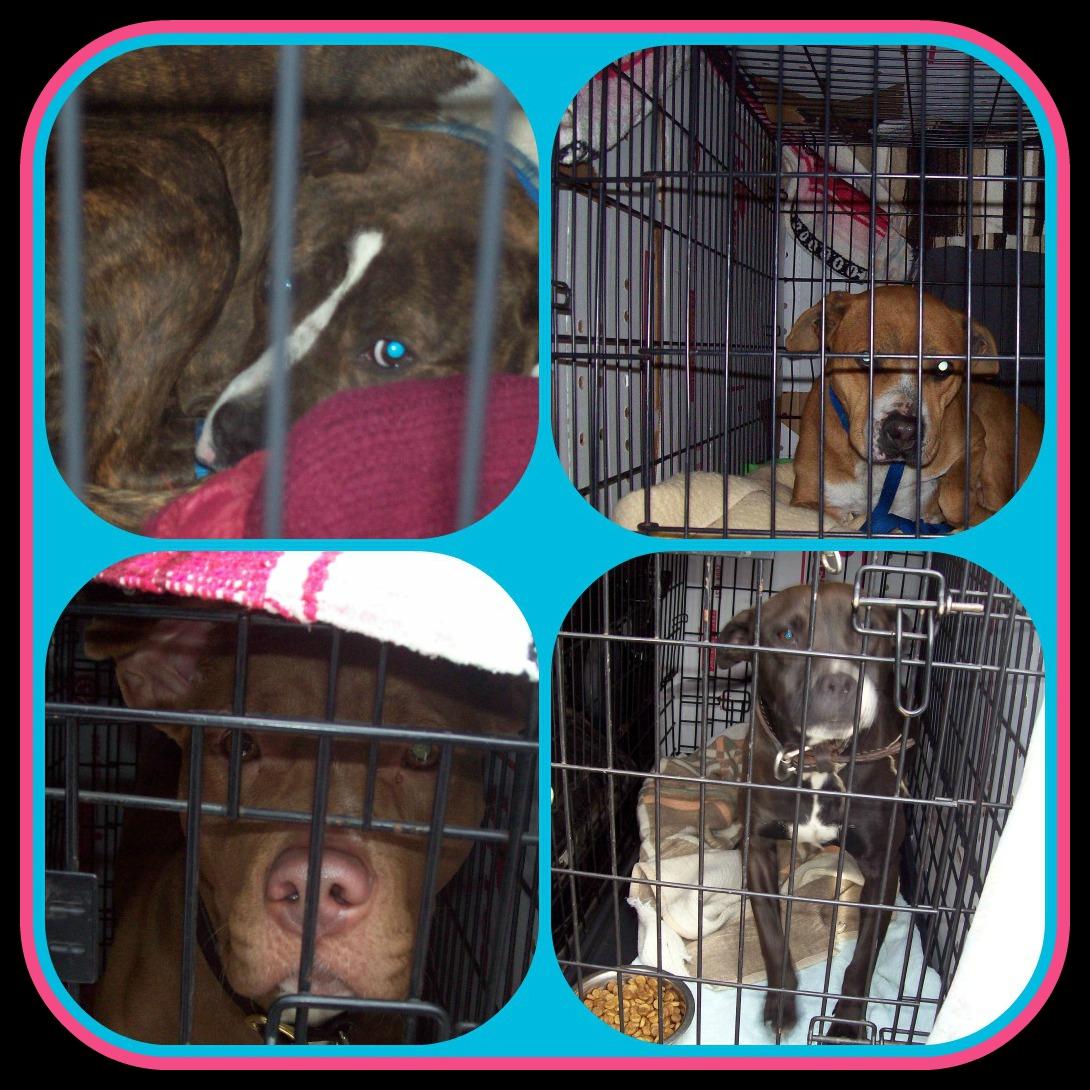 February 27 2013 PicMonkey Collage