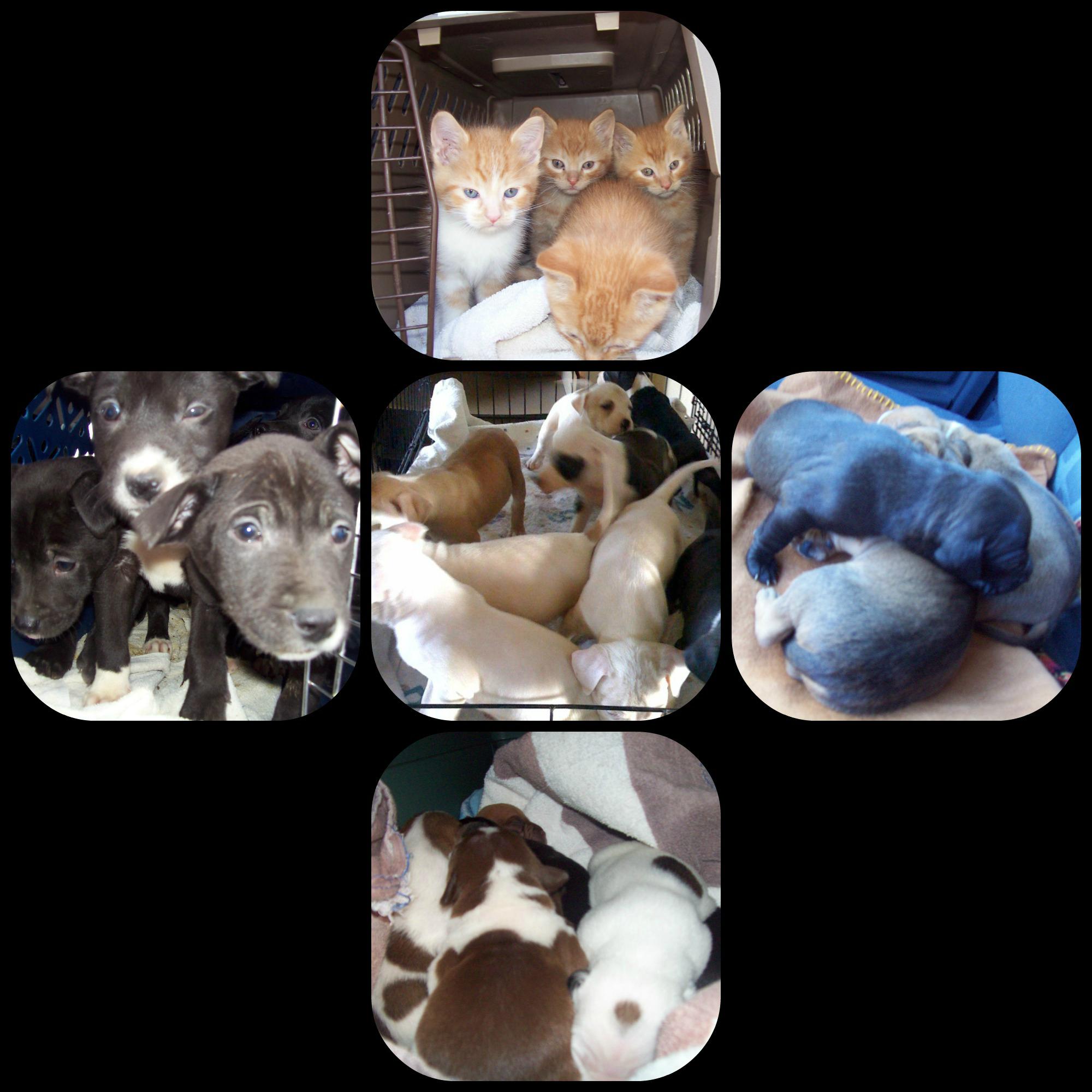 April 1 2013 PicMonkey Collage