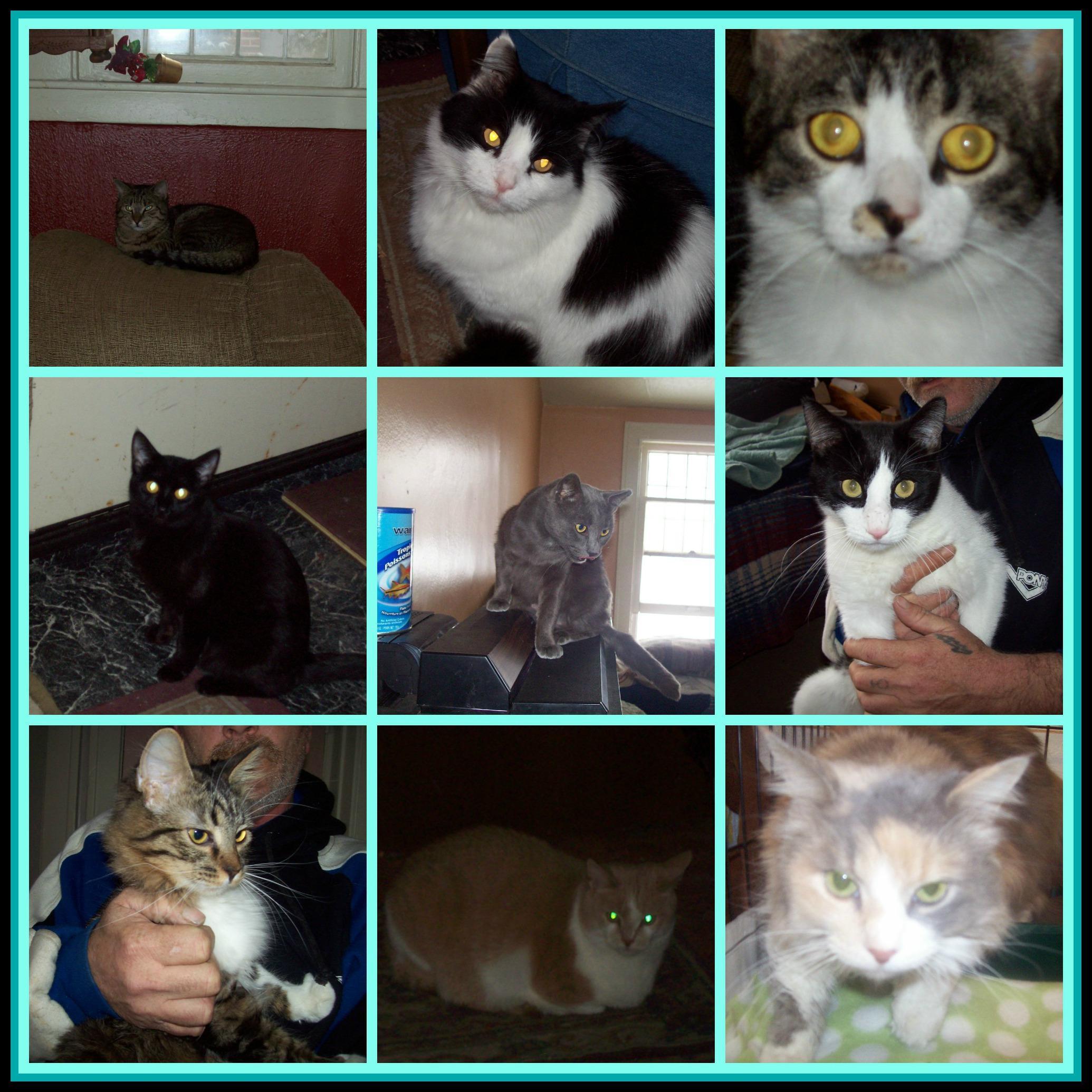 Arnold cats April 3 2013 PicMonkey Collage