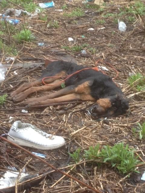 dead dog story photo