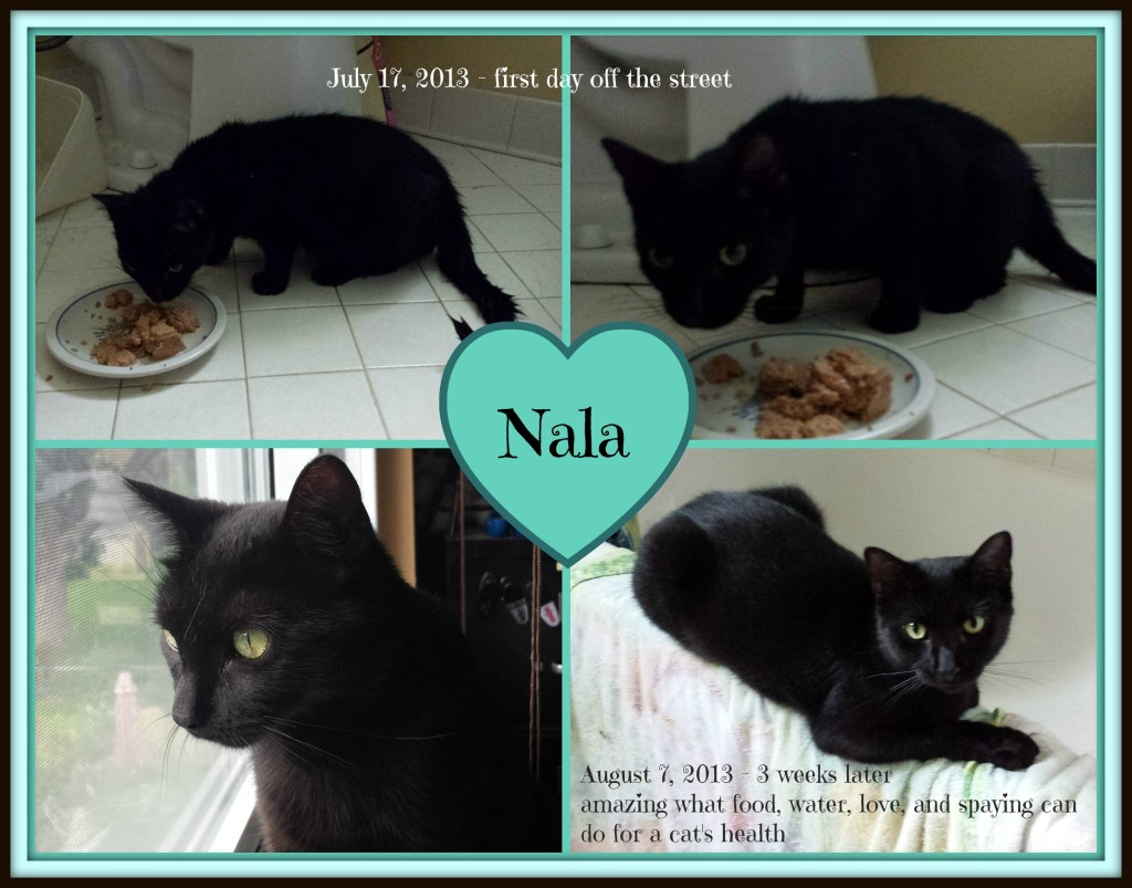 Nala before and after PicMonkey Collage