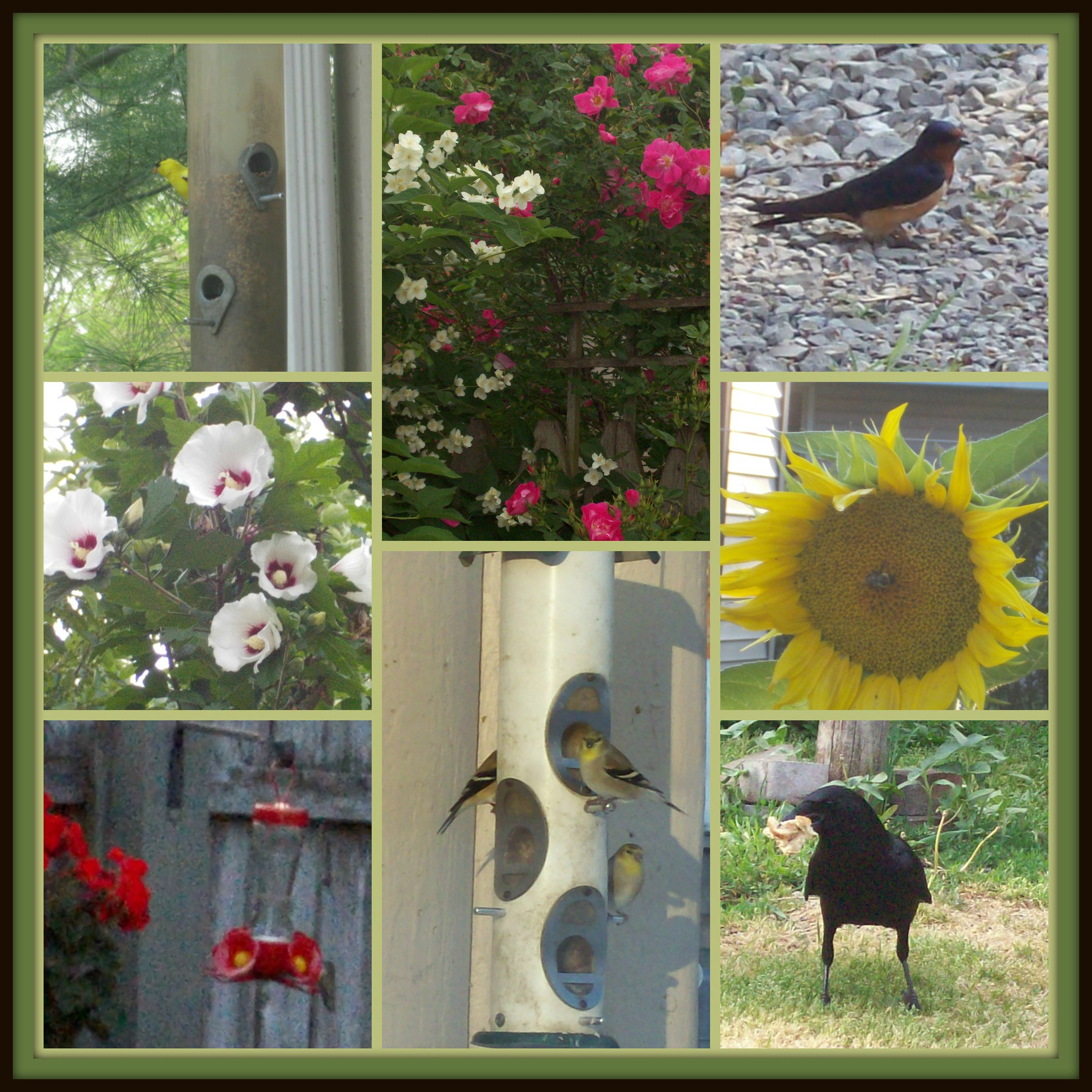 September 23 2013 PicMonkey Collage