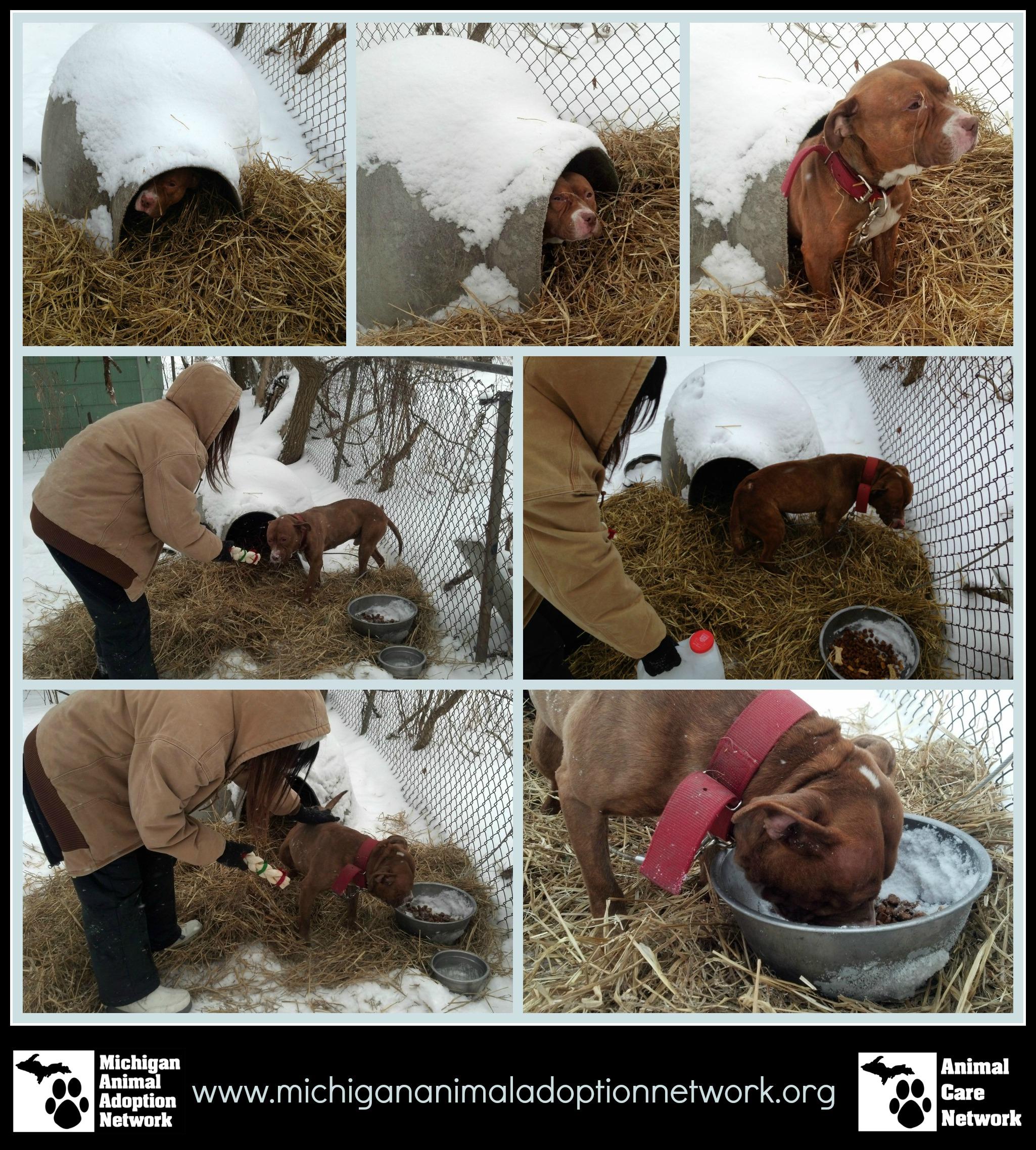 January 26 2014 PicMonkey Collage