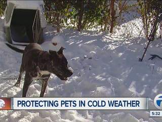 Protecting_pets_in_cold_weather_1219680000_20140103175218_320_240