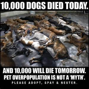 10000 dogs died today