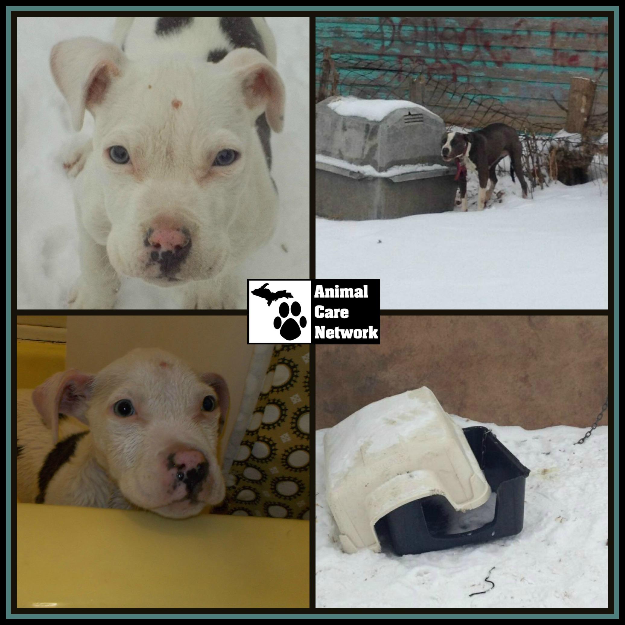 February 5 2014 PicMonkey Collage