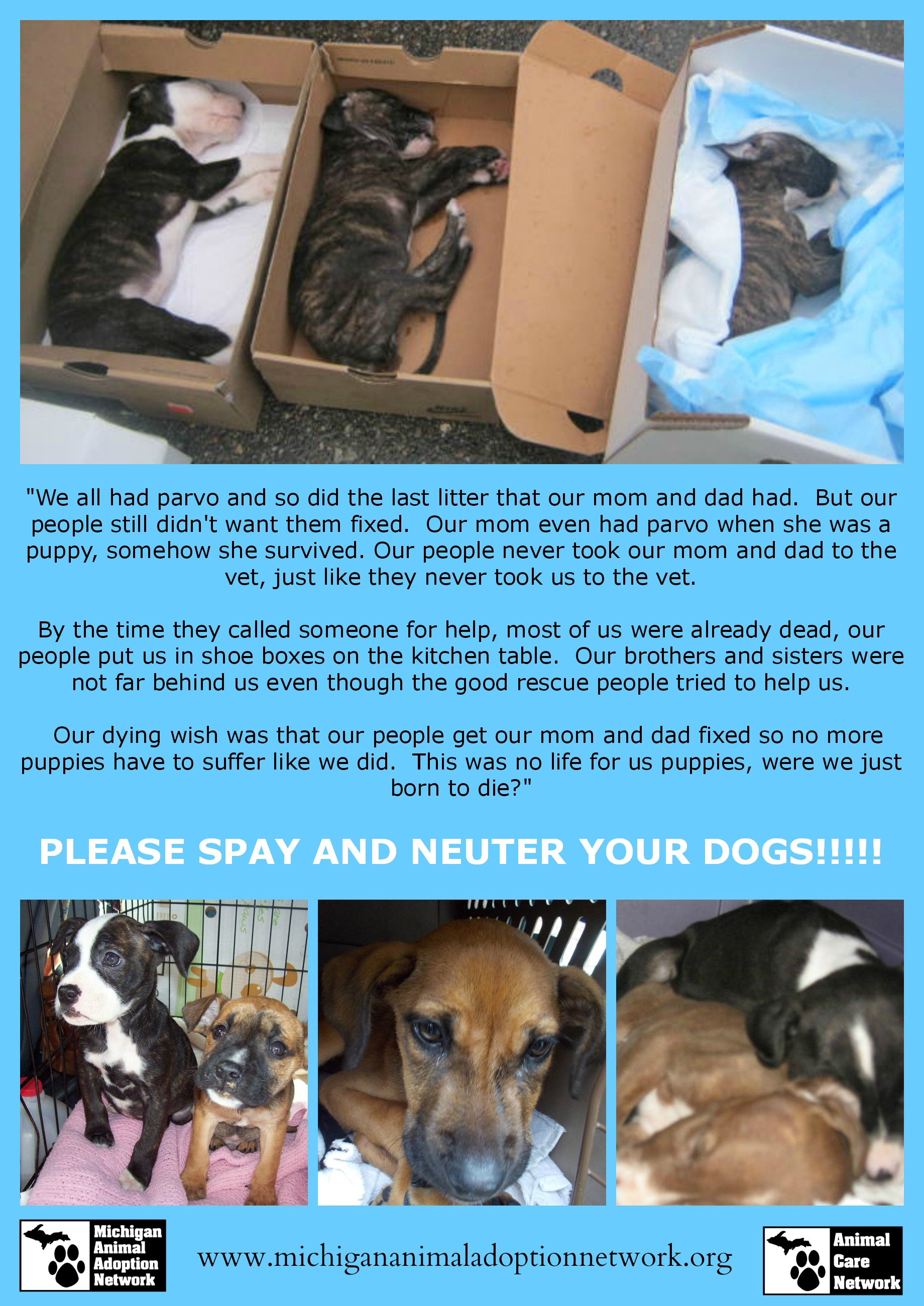 Spay and neuter puppy PicMonkey Collage