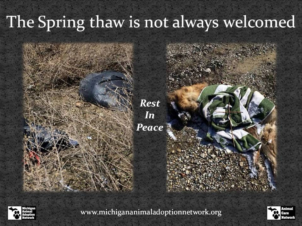 spring thaw is not welcomed