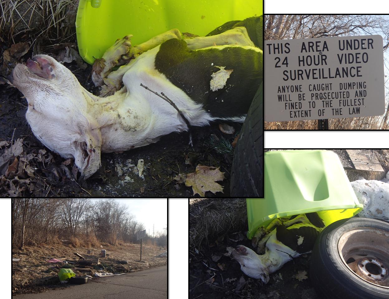 June 15 2014 no dump