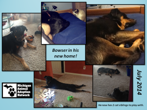 Bowser in new home