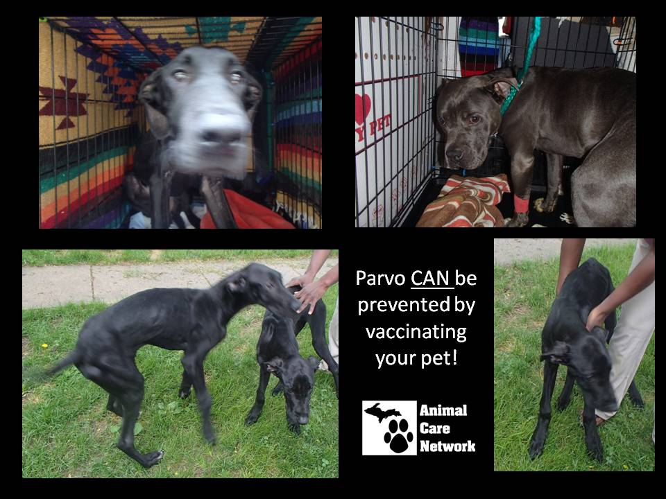 July 14 2014 parvo can be prevented