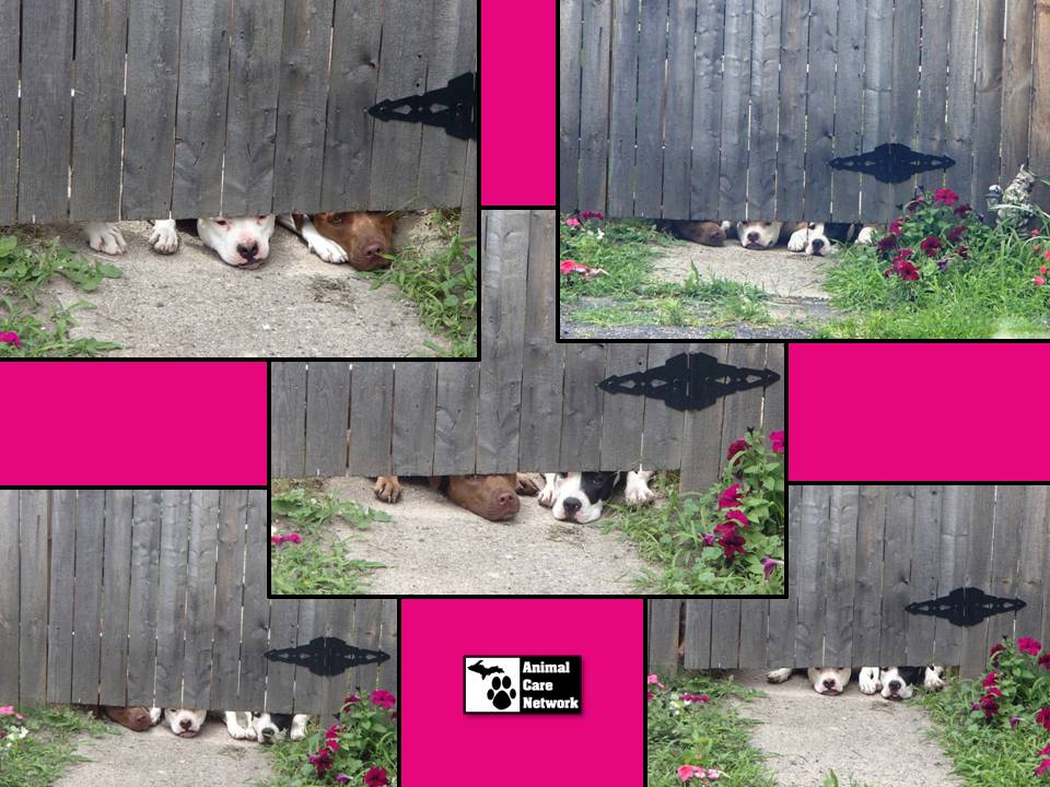 July 31 2014 greetings from the dogs