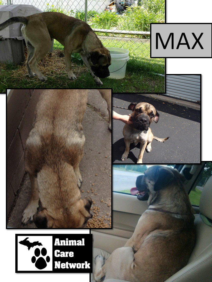 july 10 2014 Max