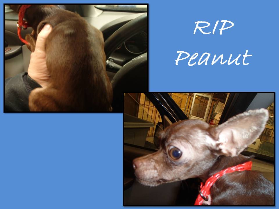 August 27 2014 Poor little peanut