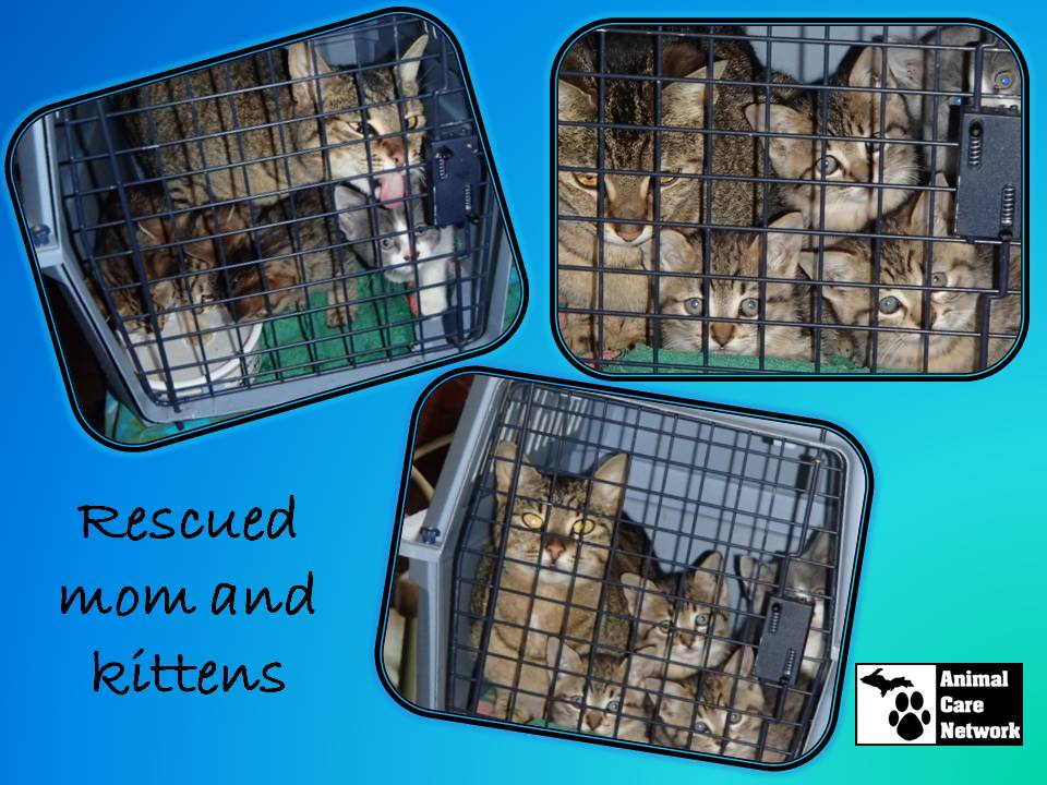 August 28 2014 Rescued mom and kittens