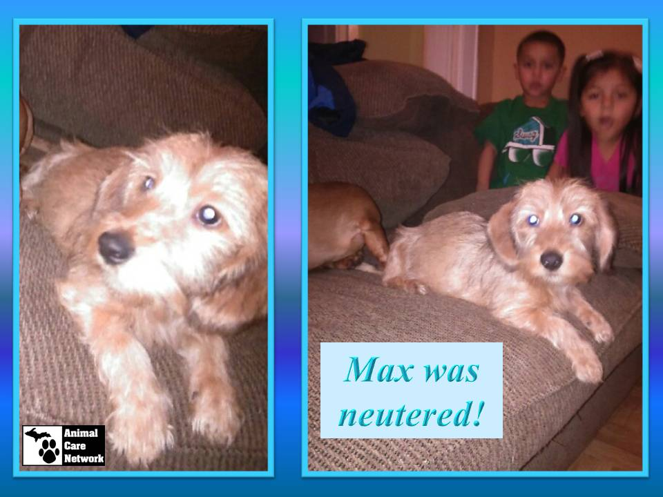 August 29 2014 Max was neutered
