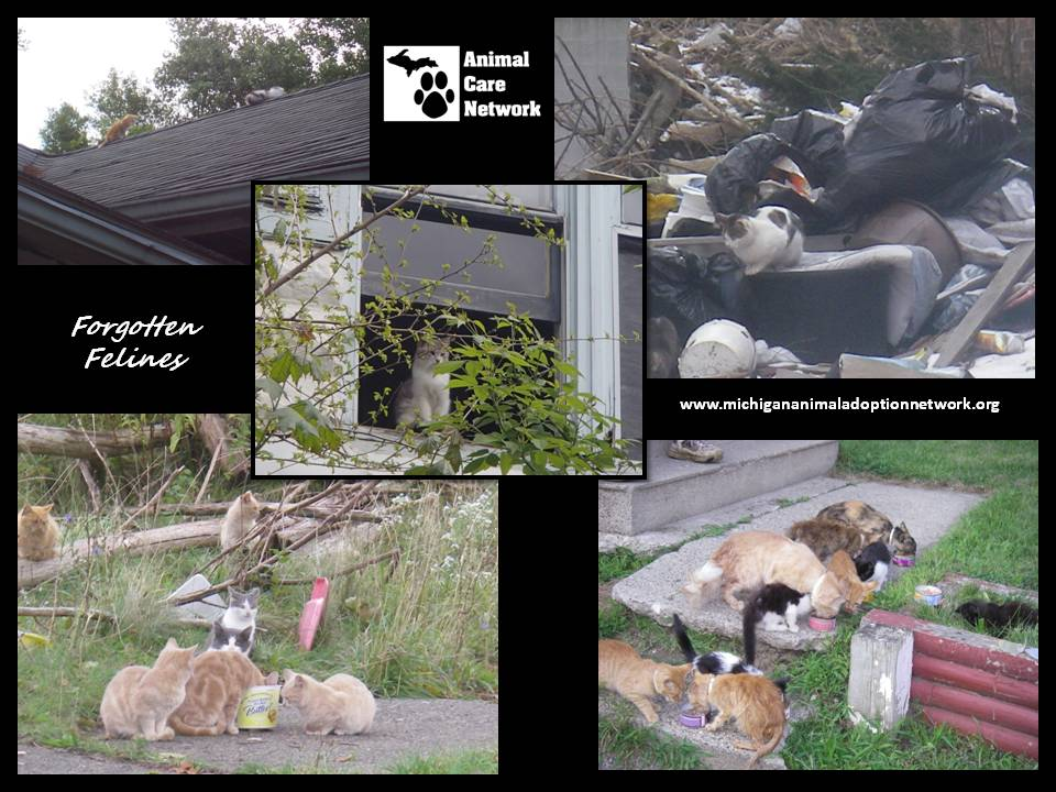 August 31 2014  cat problem in the target area
