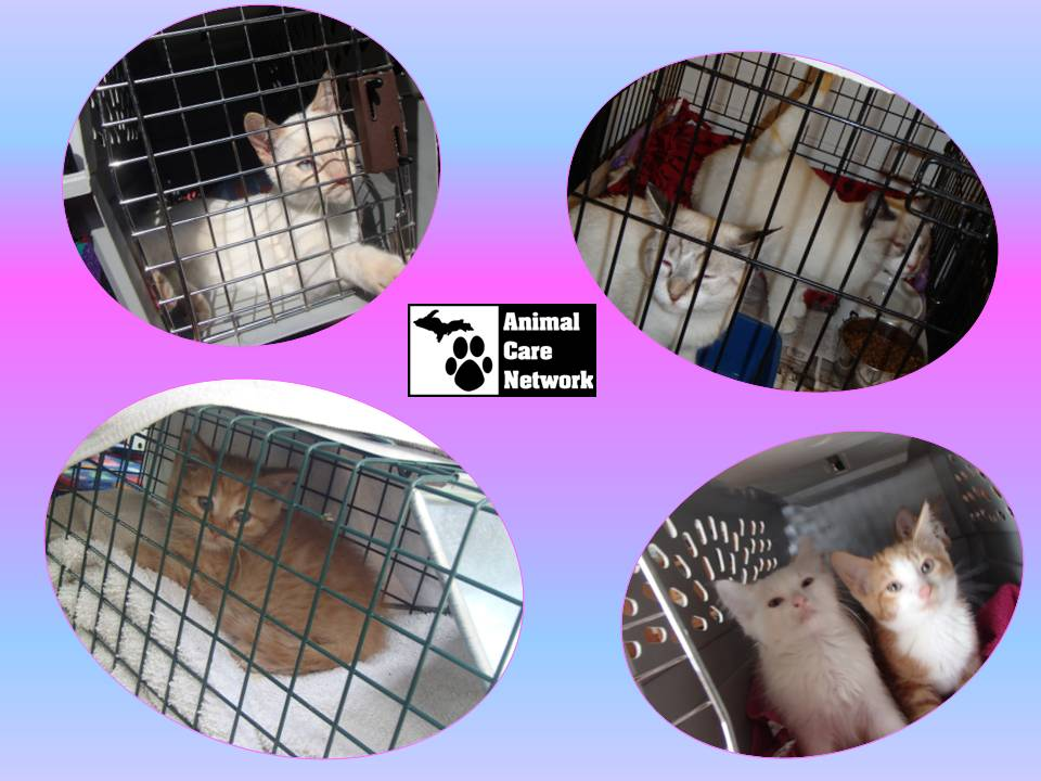 September 16, 2014 Cats and Kittens