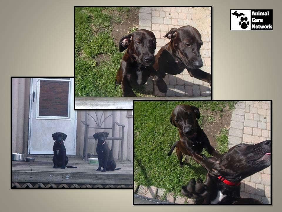 September 16 2014 Kathys rescue puppies