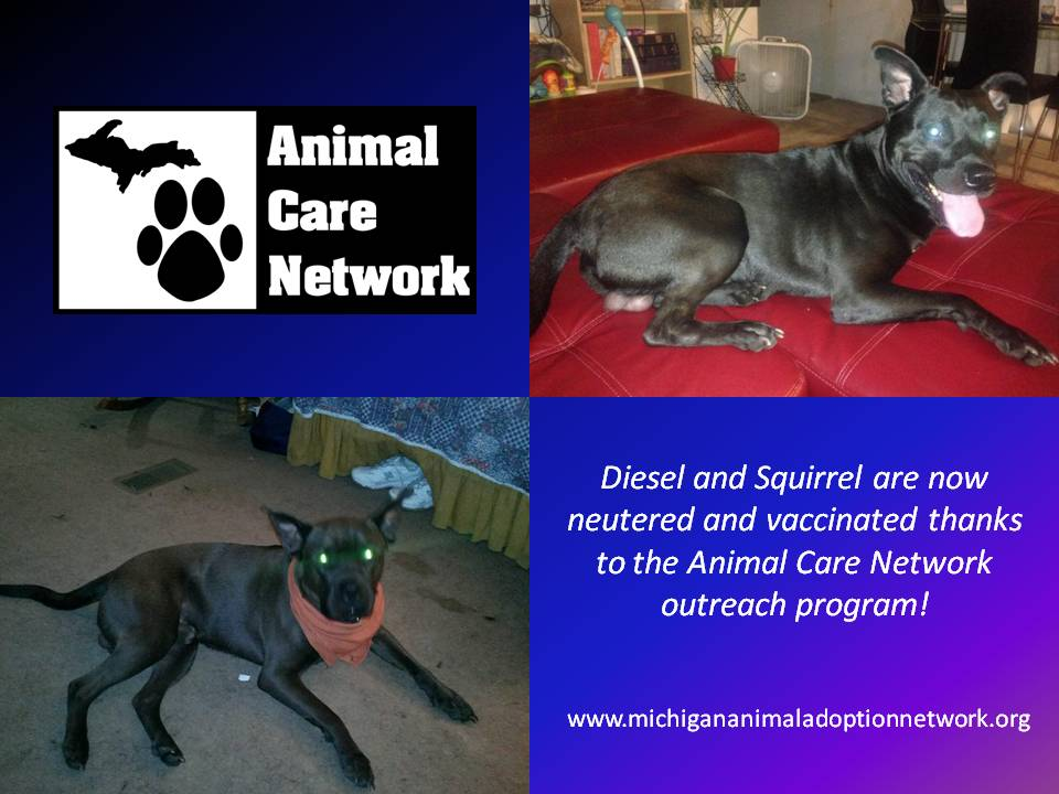 September 2 2014 Diesel and Squirrel