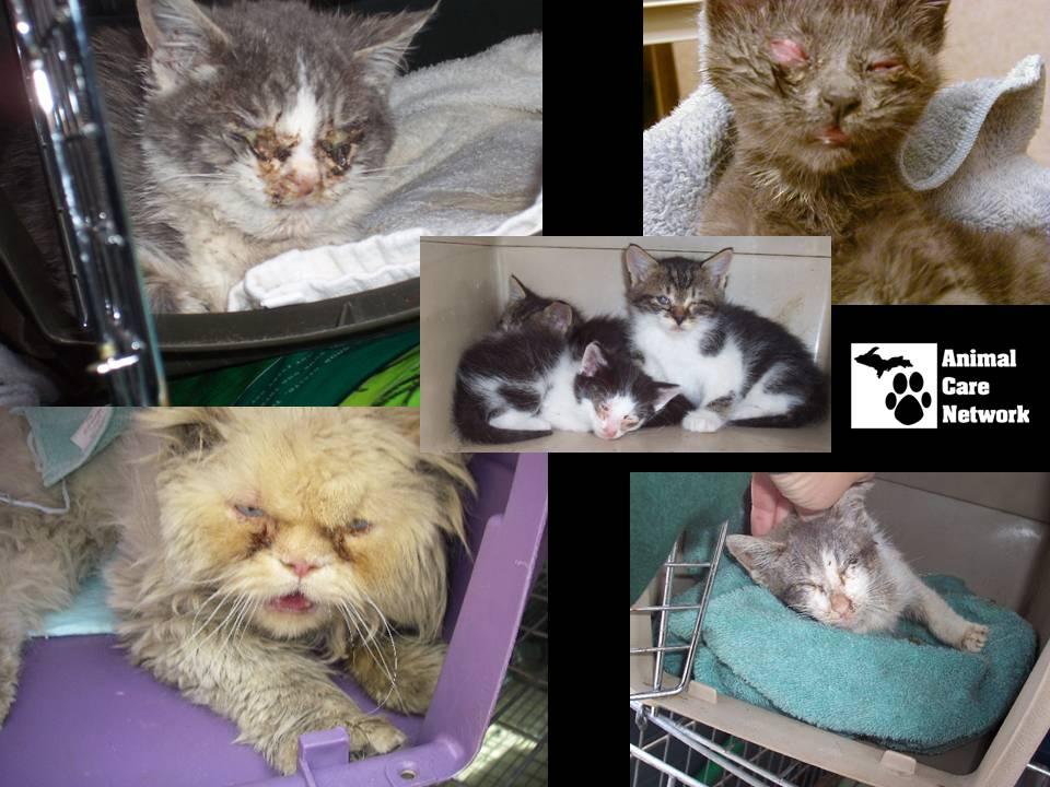 September 3, 2014 Cat Problem #2.pptx