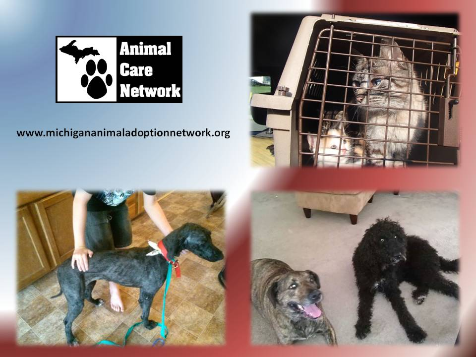 September 4 2014 Animal Abuse of dogs cats