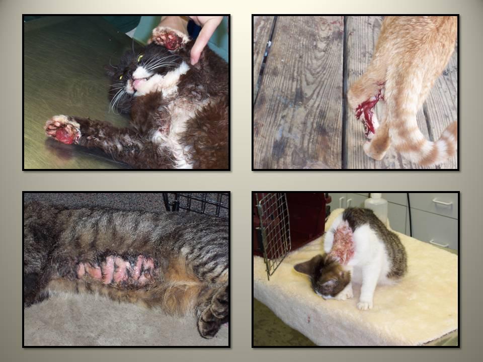 September 4 2014 Cat Problem 3 injured