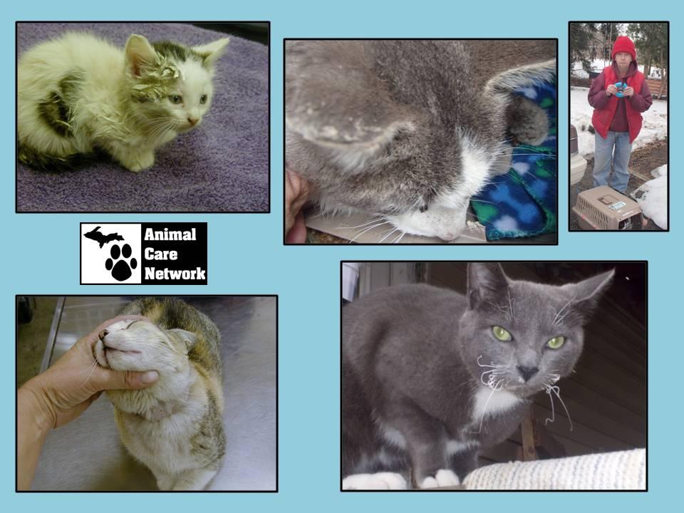 September 5, 2014: Cat Abuse in Target Areas » Michigan Animal