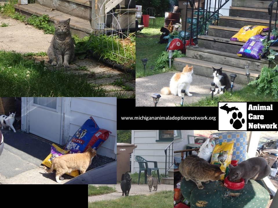 September 6 2014 Cat Food Assistance