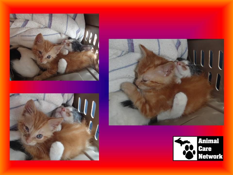 September 8 2014 Heartbreaking kitten rescue