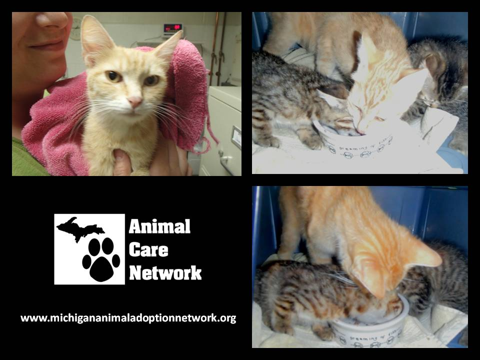 September 9 2014 Mom and Kittens Rescue