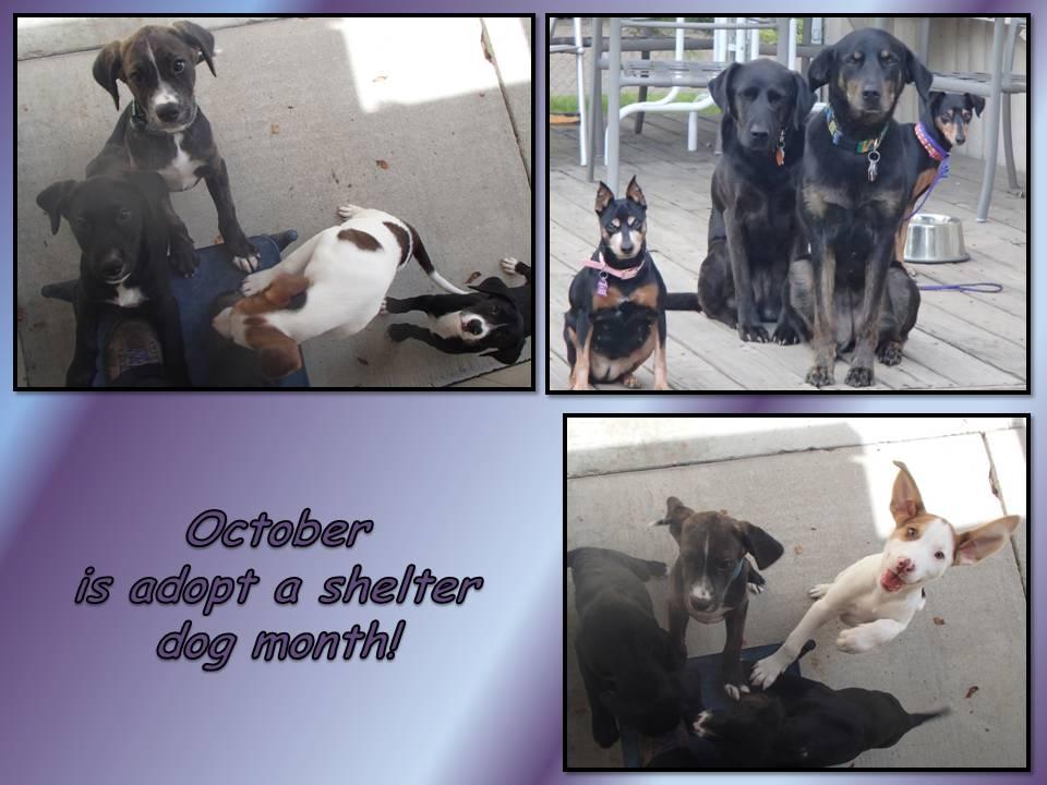 October 22 2014 October is adopt a shelter dog month