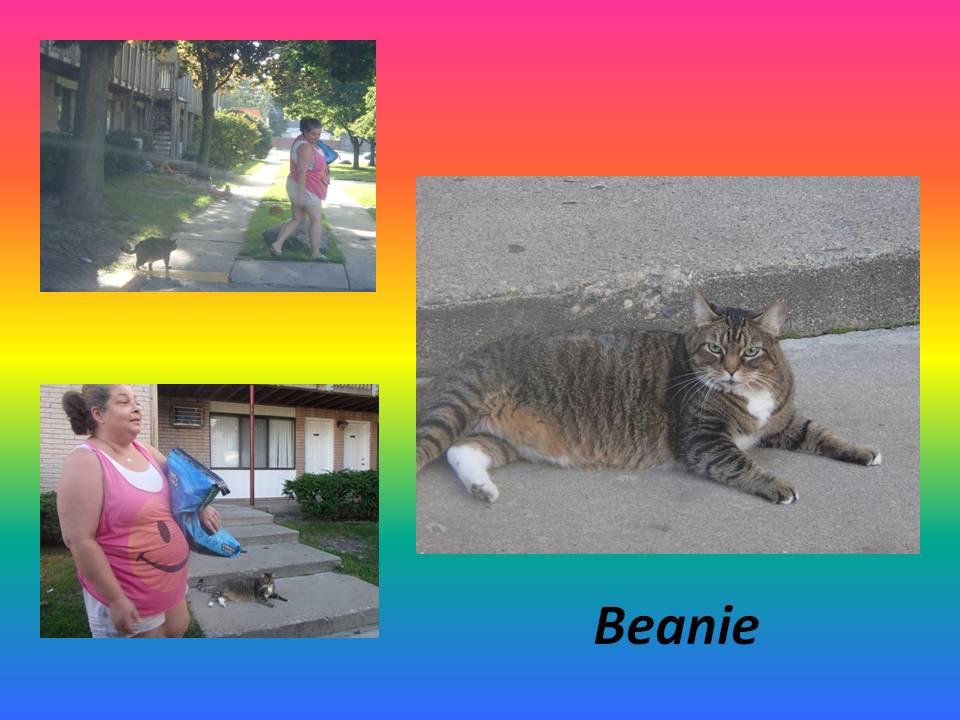 October 23 2014  Beanie