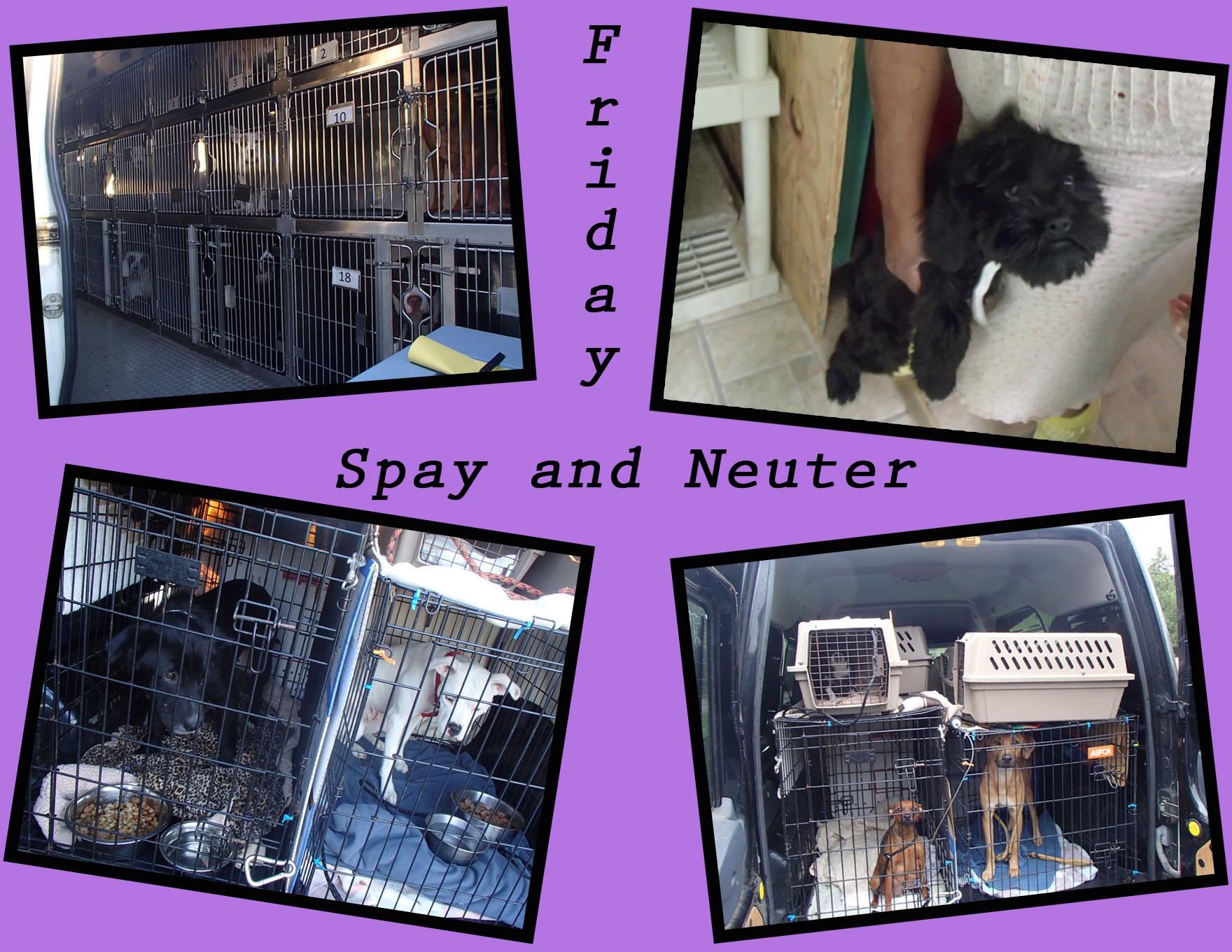 Friday spay neuter