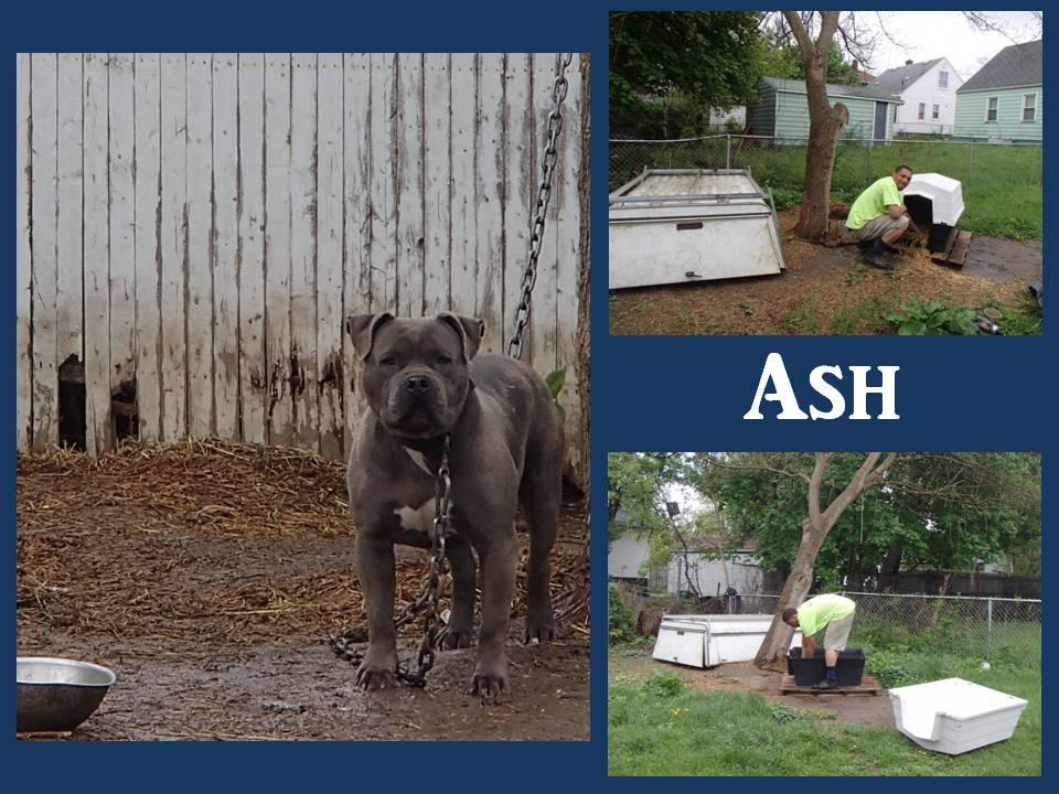 Adequate Shelter Ash