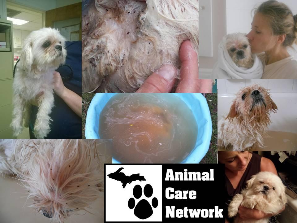 cat dog flea infestation Peaches the dog part 2